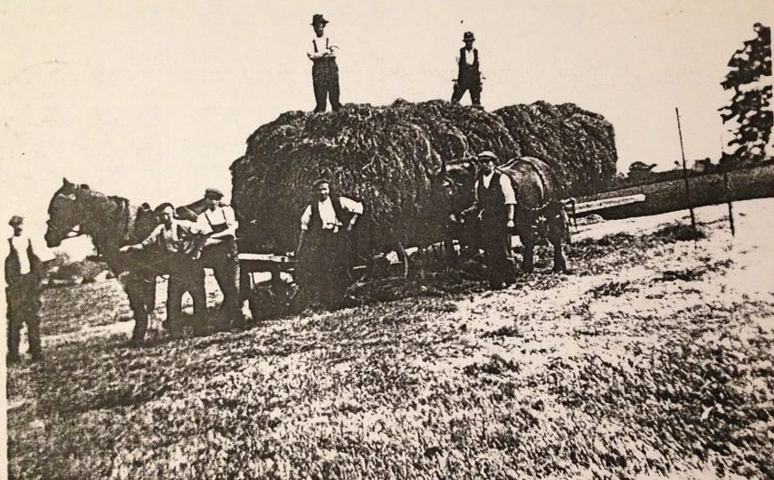 Berry and Sons haymaking, 1914