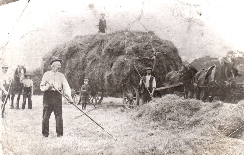 Chipping Haymaking