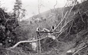 Berry's workers gathering wood